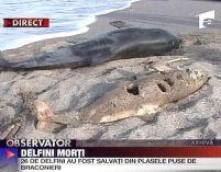 delfin impuscat