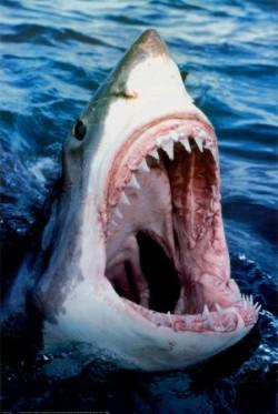 78027great-white-shark-posters.jpg