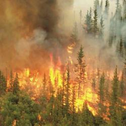 California Incendiu de padure