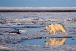 petrol arctic
