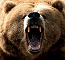 atac al ursilor