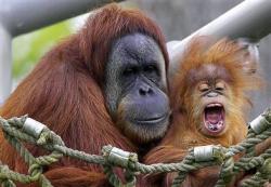 extinctia primatelor