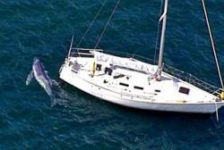 pui de balena