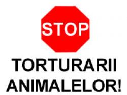 stop torturarii animalelor