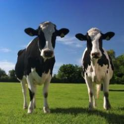 vacile arata nordul