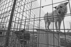 adapost pentru animale
