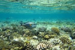 specii noi de corali