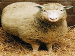 clonarea animalelor