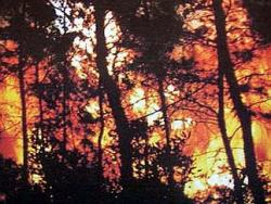 incendiu de padure