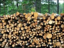 lemn supravegheat prin gps