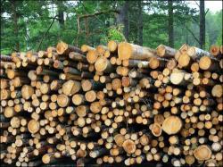masa lemnoasa