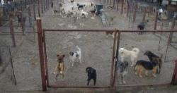 padoc pentr cainii comunitari