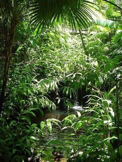 padure tropicala