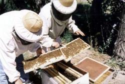 apicultura_paquetes_211_2007031282631_880.jpg