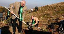 plantare copaci arsinel