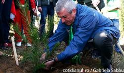 record verde la plantare