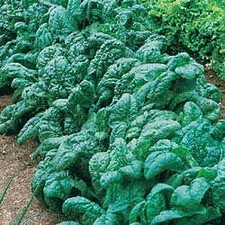 Care este leguma verde care î?i p?ze?te cel mai bine creierul