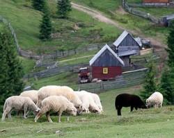 Fermierii suceveni solicita o interventie ferma la Comisia Europeana pentru ca