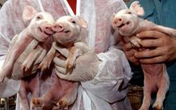animale clonate