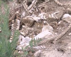 animale moarte - protan