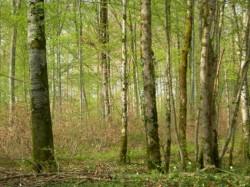Dezbatere public? pe tema legii de modificare a Codului silvic