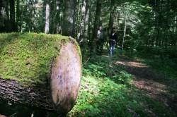 Protest în Capitală faţă de tăierile ilegale de copaci şi de înstrăinarea pădurilor