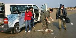 delfini morti pe plajele romanesti