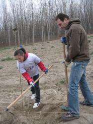 voluntari plantari