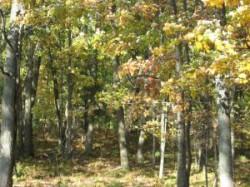 impadurirea terenurilor degradate