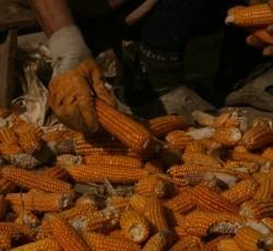 "Seminar cu tema ""Agricultura ?i biotehnologiile moderne în România ?i Europa"""
