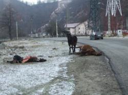 drama animalelor din romania