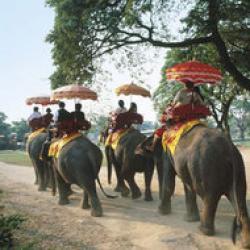 contrabanda cu elefanti