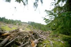 Despăduririle lasă răni adînci în Europa de Est