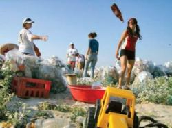 eliminarea gunoiului din delta