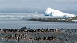 incalzirea arcticului