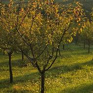 Legatura dintre pomi si oameni