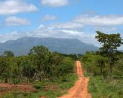o noua padure in mozambic