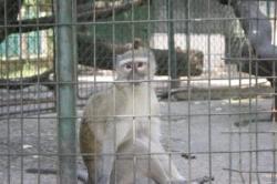 organizare la gradina zoologica