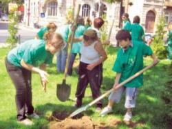 plantare copacul de hartie