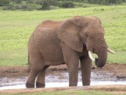 rock pentru elefanti