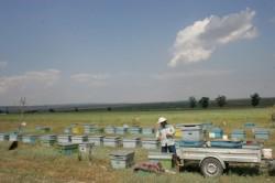 Lupta pentru subven?iile ecologice taie ajutoarele primite de fermieri