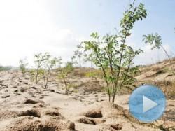 Preşedintele PDL Bistriţa-Năsăud spune că judeţul Bistriţa-Năsăud devine la fel de arid ca un deşert african