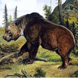 ursul de pestera