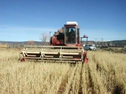 Agricultura ecologicã, in crestere de la an la an panã acum, a fãcut un pas inapoi, la nivelul judetului Vaslui