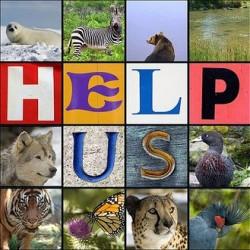 animale amenintate cu disparitia