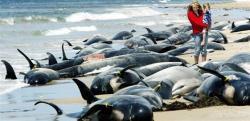 balene sinucigase