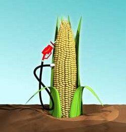 Votul Parlamentului European lasa biocarburantii in aer