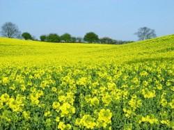 Adrian Mutu va produce biodiesel in zona industriala a orasului Oradea