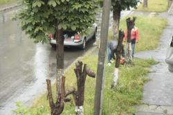 copacii si cladirile
