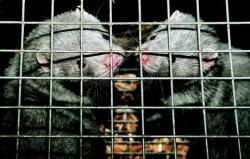 cruzime impotriva animalelor